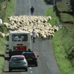 How to Drive Safely on Rural Roads